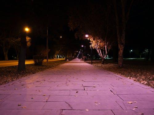 Free stock photo of autumn, city, night