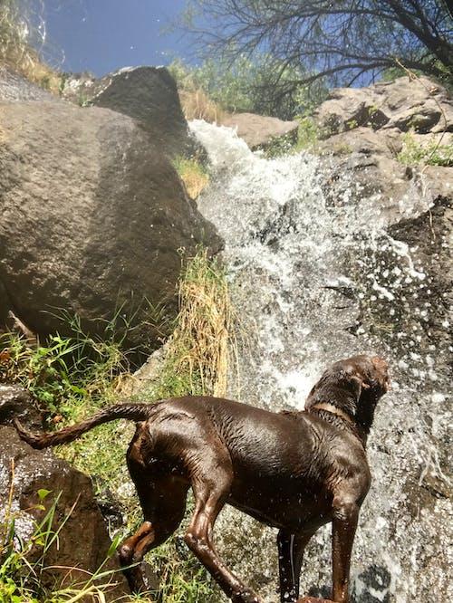 Photos gratuites de animaux de compagnie, chiens