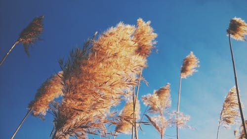 Dry Plant Under Blue Sky