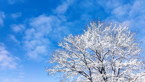Free stock photo of blue skies, tree, winter