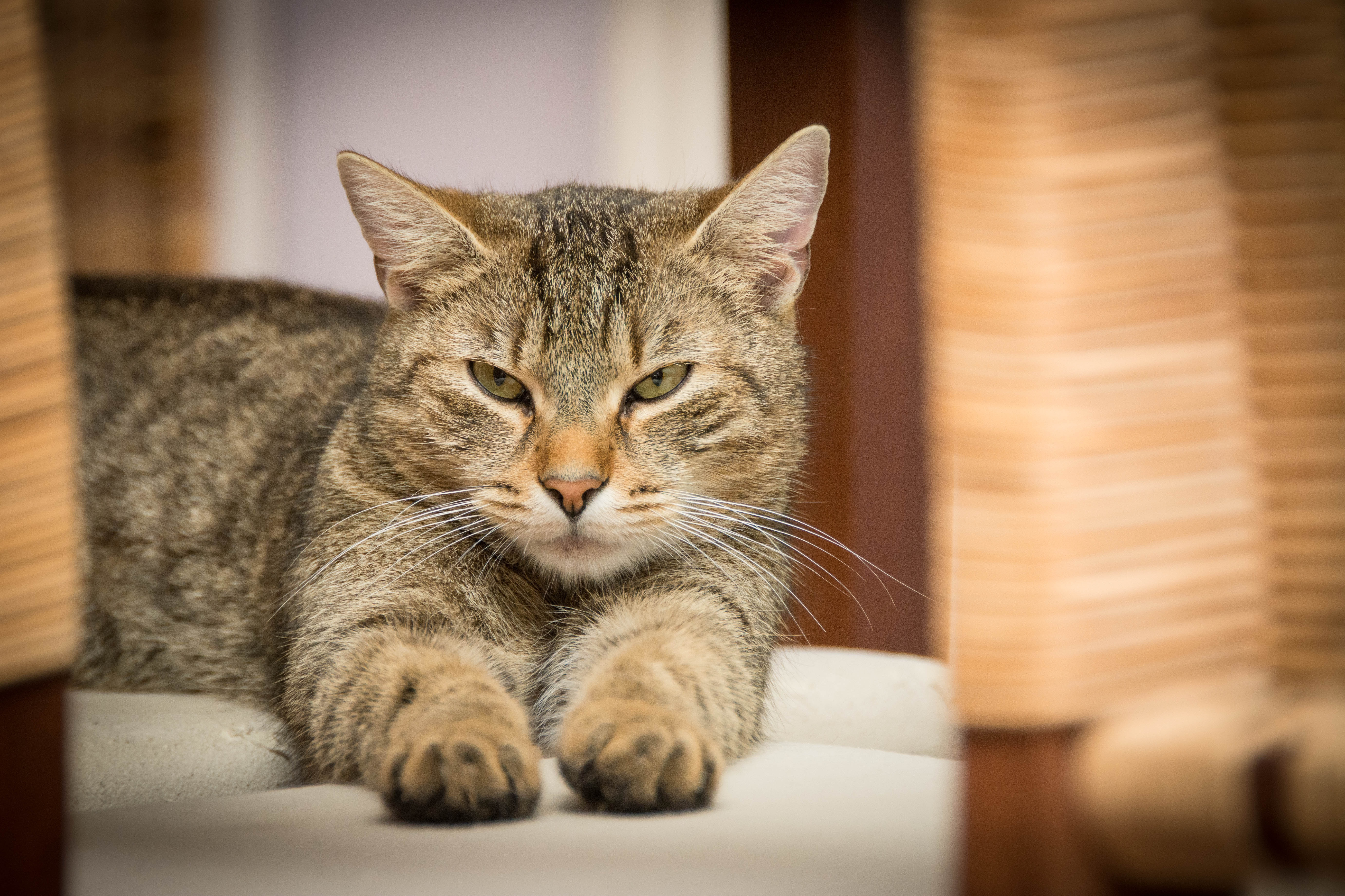 insurance for cats with cancer