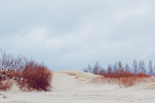 Free stock photo of dune, sans