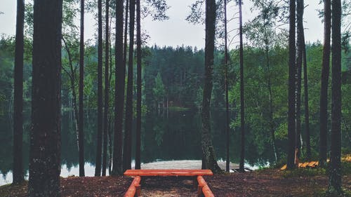 Free stock photo of lake, nature