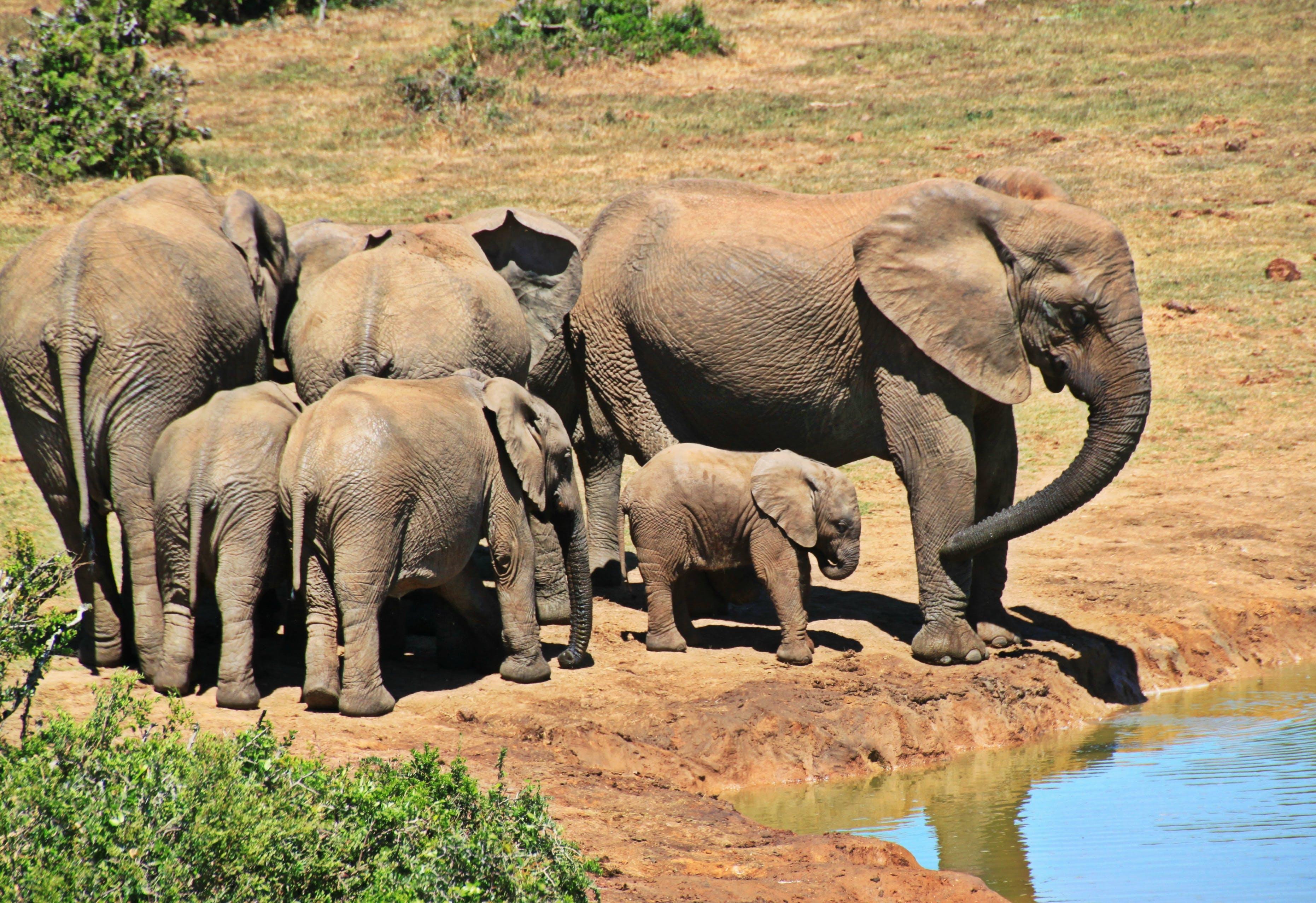 afrikanischer elefant, baumstamm, busch