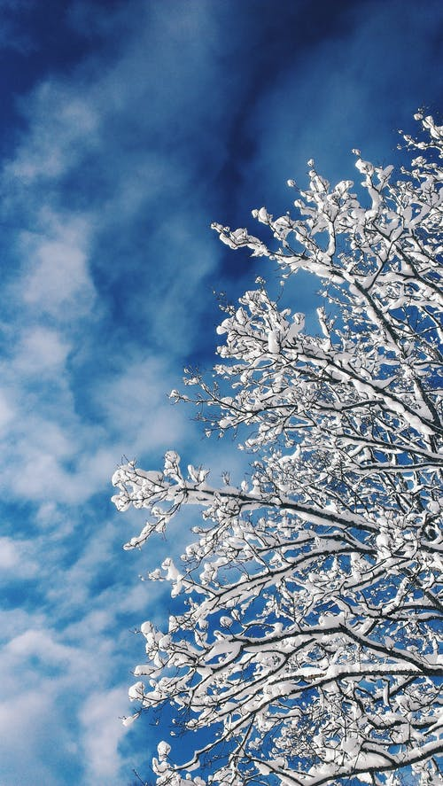White Tree Under Blue and White Sky
