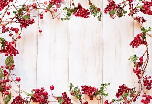 Gratis lagerfoto af bær, grænse, jul, ramme