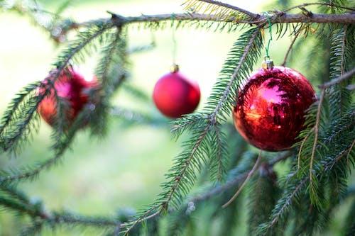 Gratis lagerfoto af dekorationer, dekorer, fyrretræ, jul