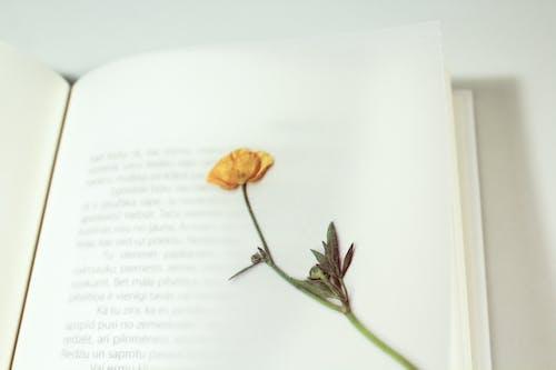Бесплатное стоковое фото с книга, страница, сухой цветок, цветок
