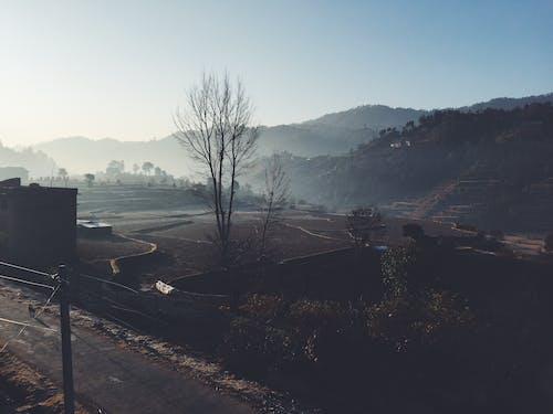 겨울, 농장 들판, 안개가 자욱한 아침의 무료 스톡 사진
