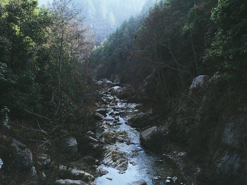 강, 물, 숲의 무료 스톡 사진