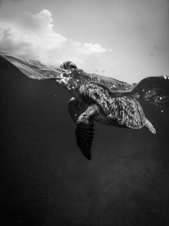 Бесплатное стоковое фото с бирюзовый, водный, движение