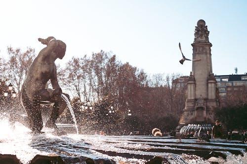 Gratis stockfoto met duif, Europa, fel, fontein