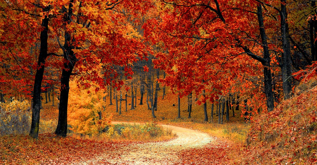 Red Leaf Trees Near The Road Free Stock Photo