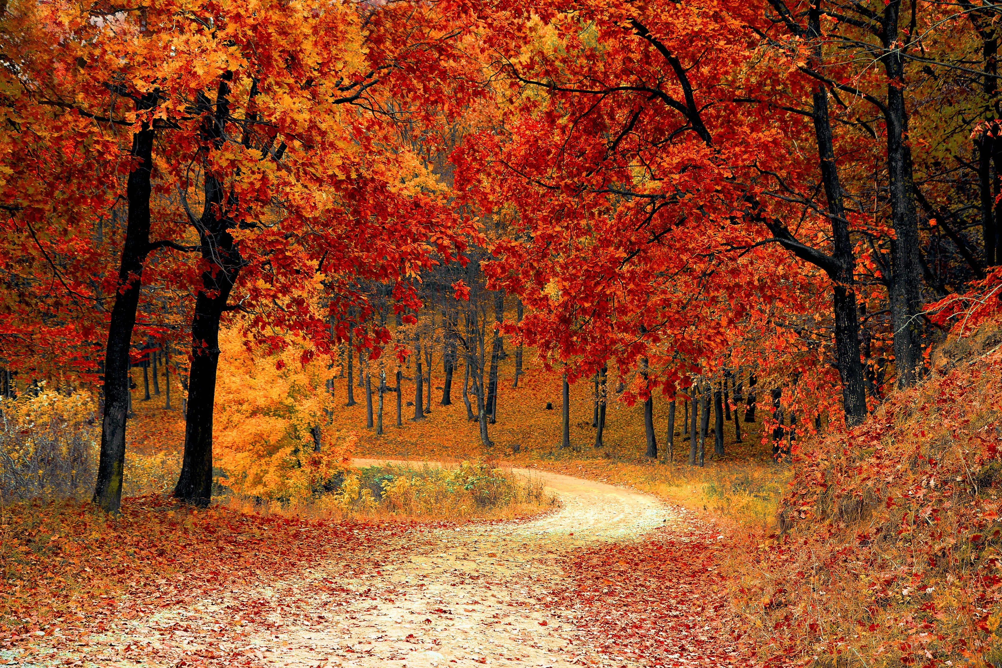 Red Leaf Trees Near the Road by Pixabay