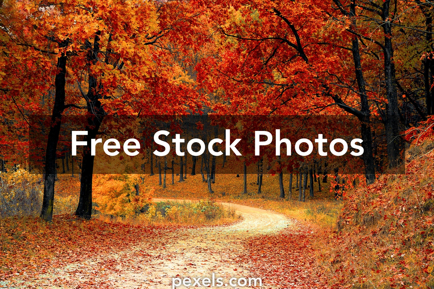 1000 Amazing Autumn Wallpaper Photos Pexels Free Stock Photos