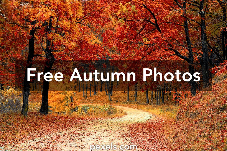 Free Nature Wallpaper Pics