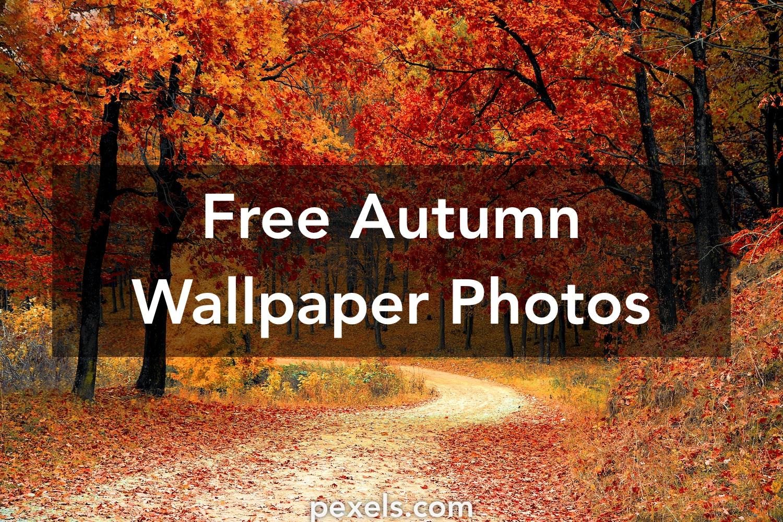 Free Fall Wallpaper