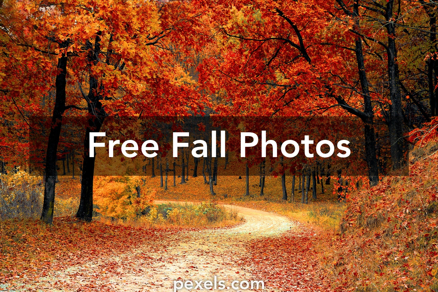 Fall pictures pexels free stock photos - Pics of fall scenes ...