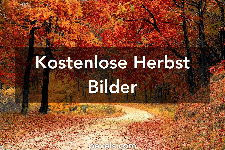 Kostenlose Bilder Herbst : 1000 herbst fotos pexels kostenlose stock fotos ~ Yasmunasinghe.com Haus und Dekorationen