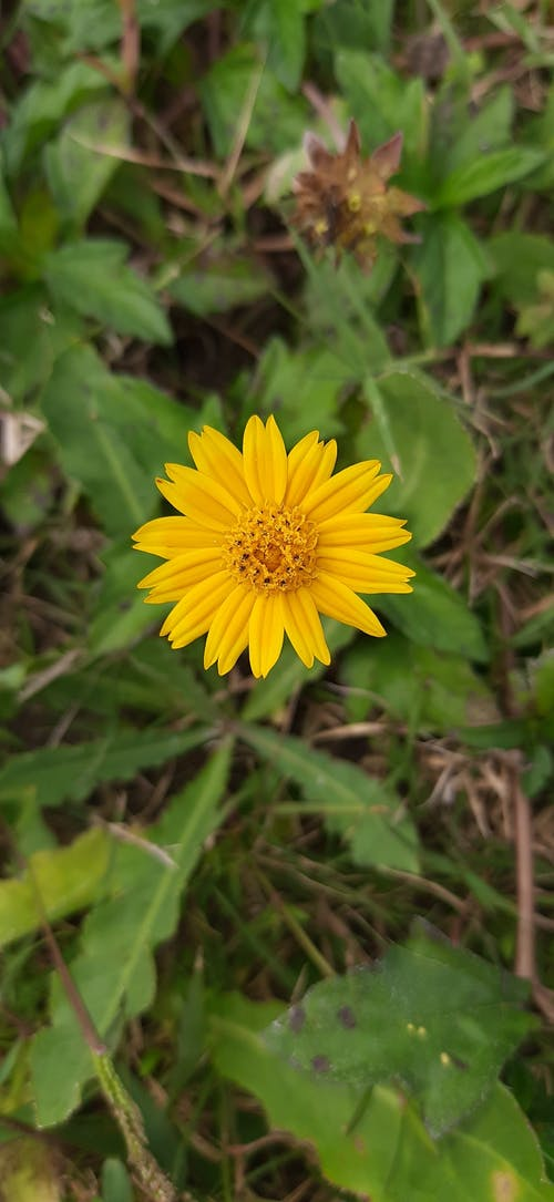 Бесплатное стоковое фото с улыбающийся цветок