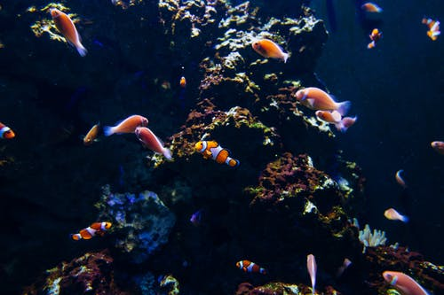 Photo Of Fishes Underwater