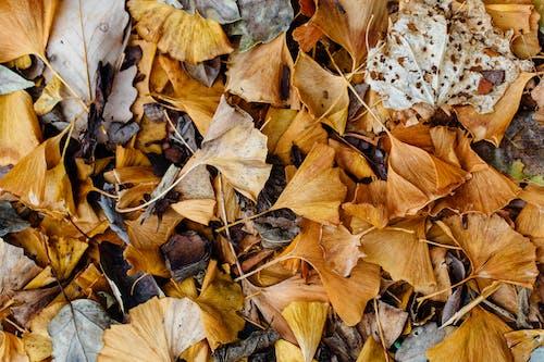 건조한, 계절, 나뭇잎, 떨어지다의 무료 스톡 사진