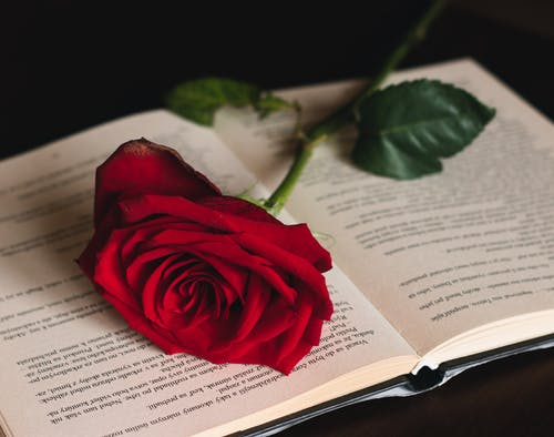 Free stock photo of book, flower, Red Rose, rose