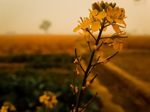 Foto stok gratis bunga, bunga kuning, daun