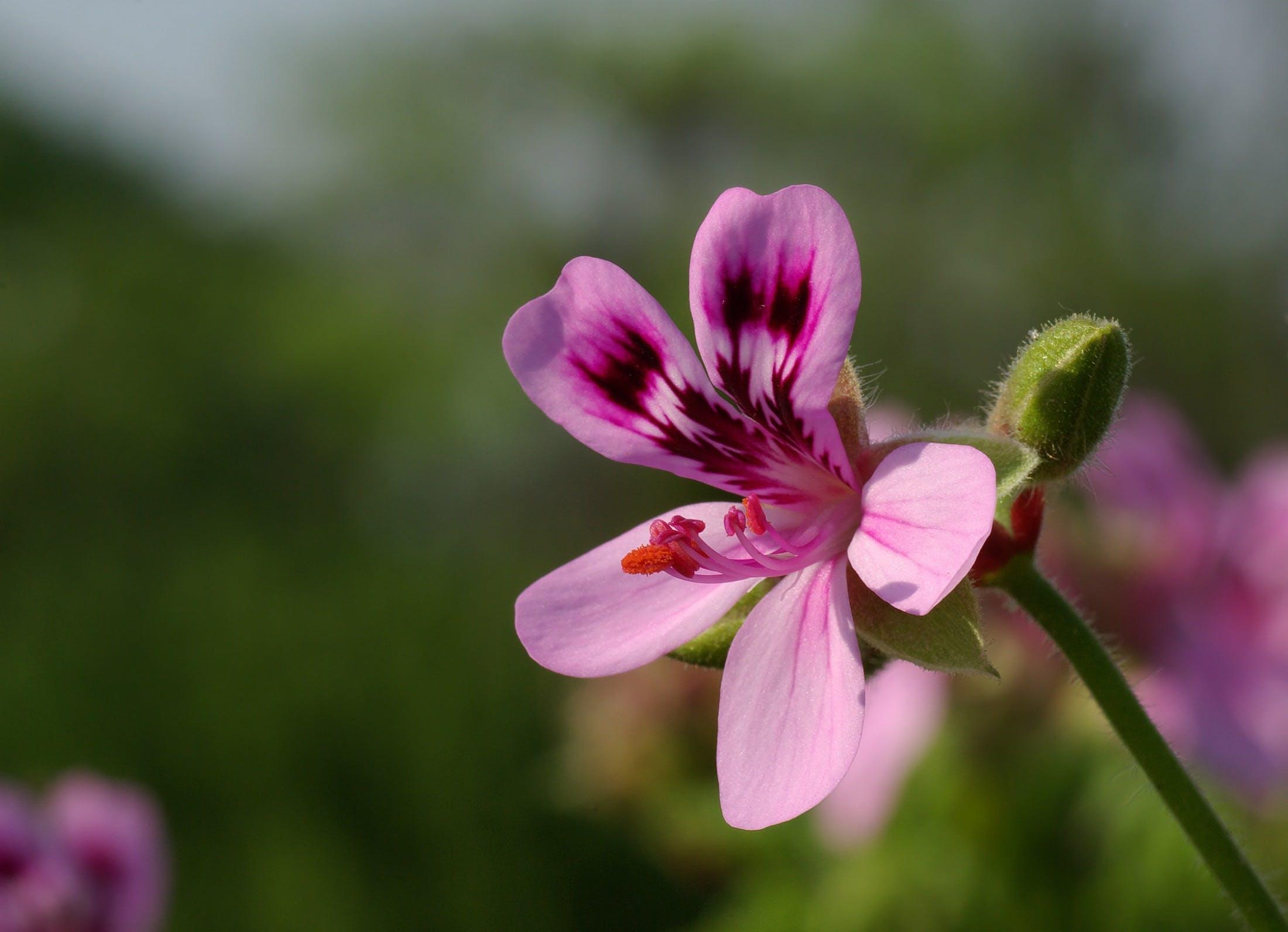 Kostenloses Stock Foto zu natur, pflanze, blume, blühen