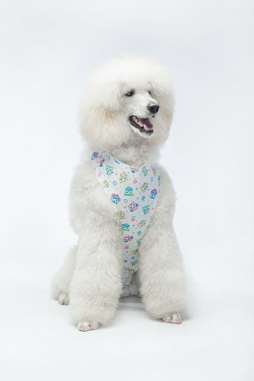 Free stock photo of domestic animal, fluffy, furry animals, king