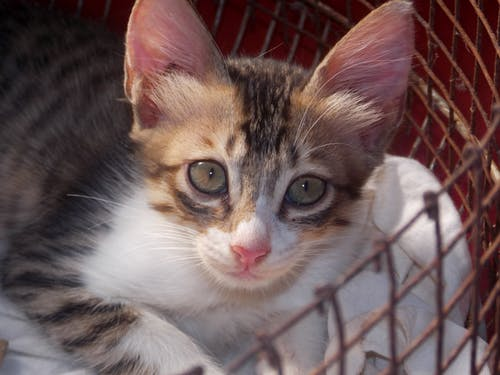 Základová fotografie zdarma na téma hravý, kočka, koťátko