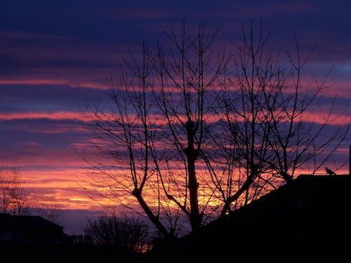 경치, 경치가 좋은, 구름, 새벽의 무료 스톡 사진