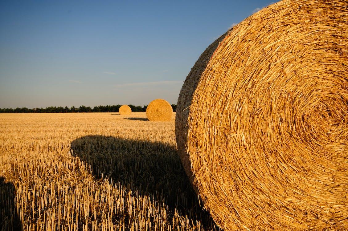 Rolls of Hay in the Field