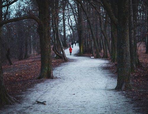 Gratis arkivbilde med forkjølelse, høst, natur, skog