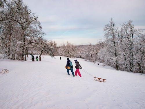 Gratis arkivbilde med landskap, natur, snø, sport