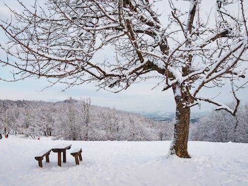 Gratis arkivbilde med landskap, natur, piknik, snø