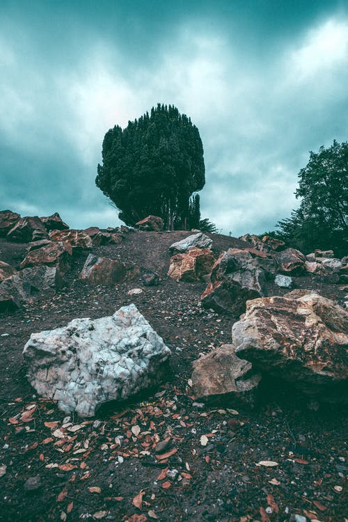 Free stock photo of attraction, cloudy, conifer, dirt