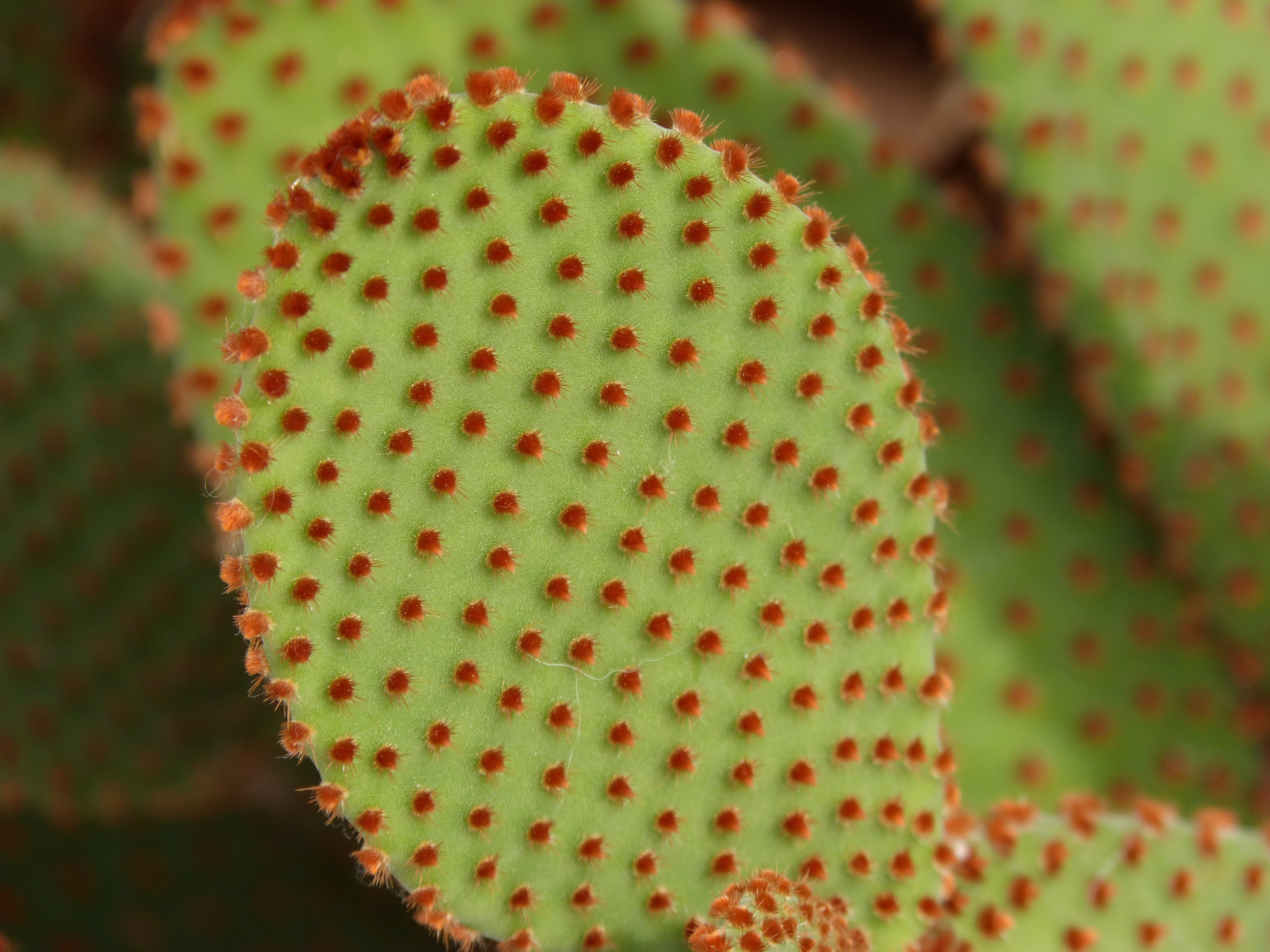 Macro Photography of Green and Red Leaf Plant