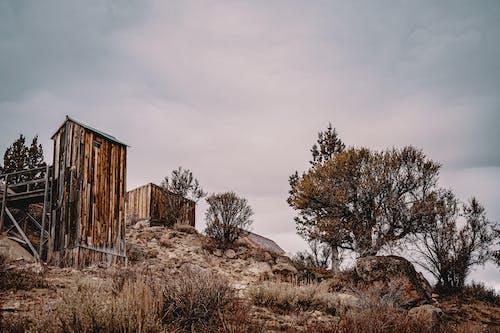 Photos gratuites de abandonné, arbres, aube, automne