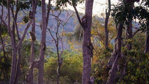 Imagine de stoc gratuită din animale, codru, fotografie cu animale sălbatice, junglă