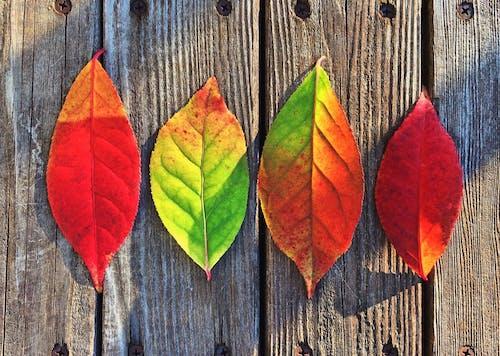 Foto stok gratis kreatif, merah, penuh warna