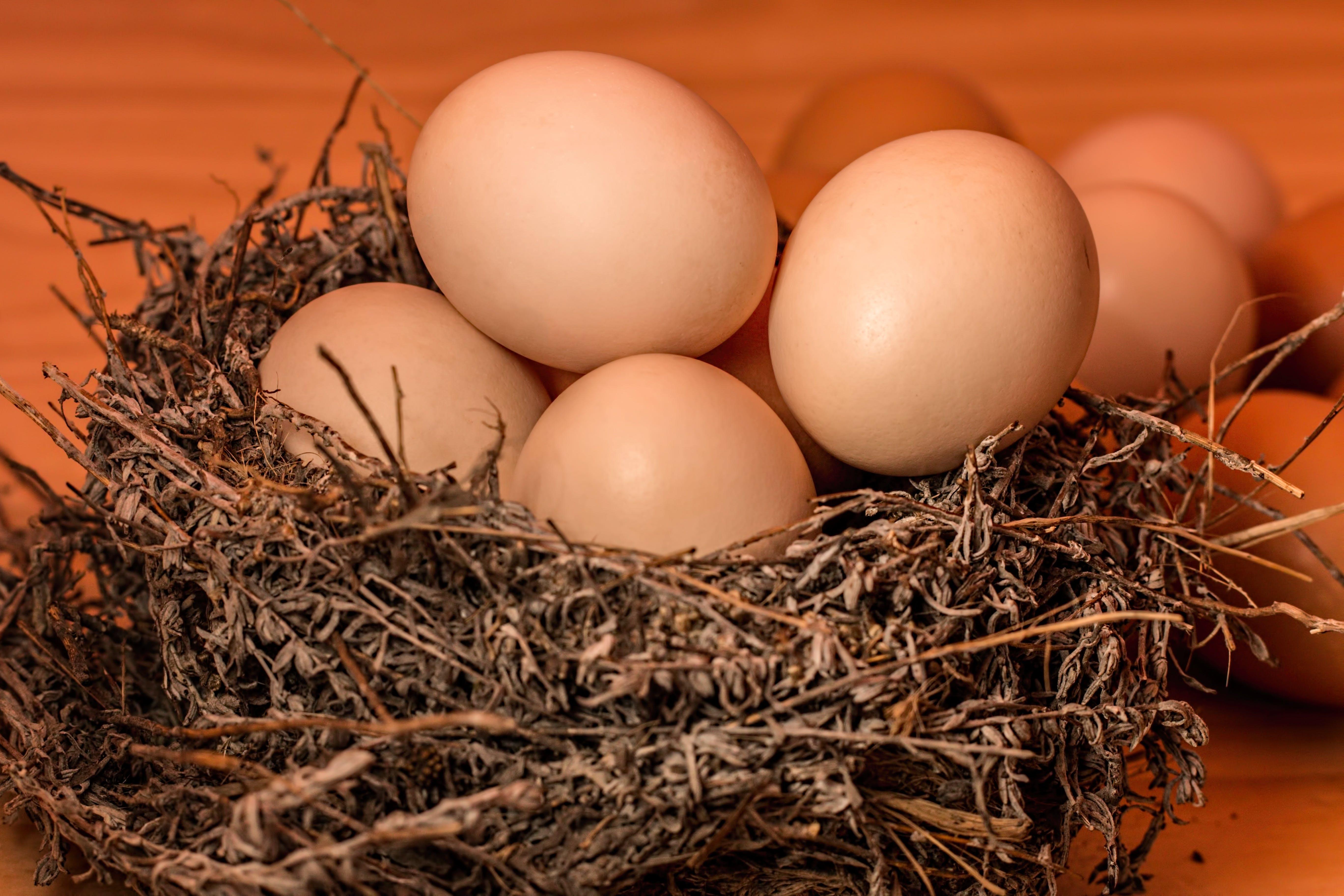 Kostenloses Stock Foto zu eier, makro, nest