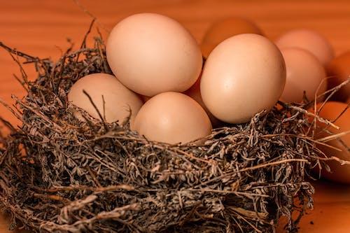 宏觀, 巢, 蛋, 鳥窩 的 免費圖庫相片