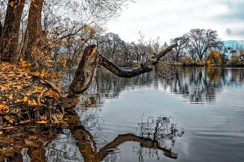 Ingyenes stockfotó az ősz színei, erdőség, kültéri fotózás, kültéri kihívás témában