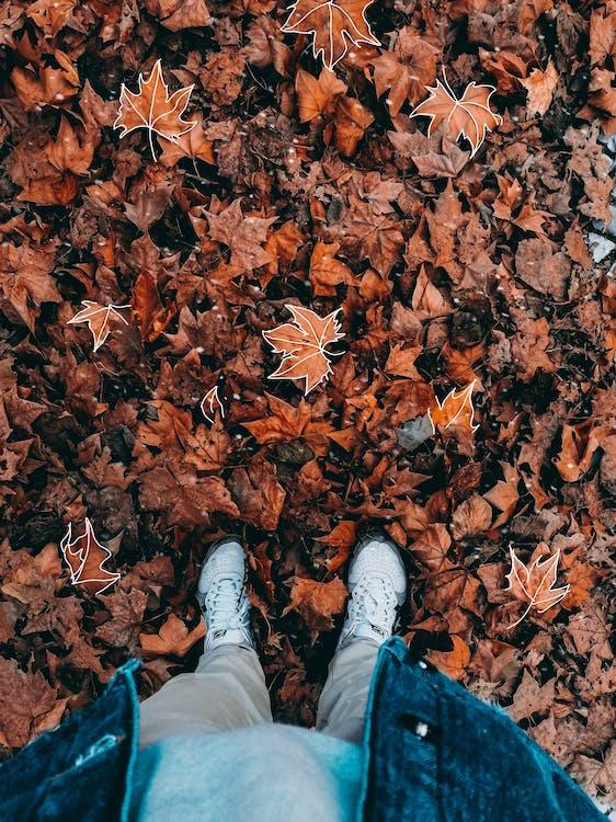 висушене листя, візерунок, зйомка з висоти
