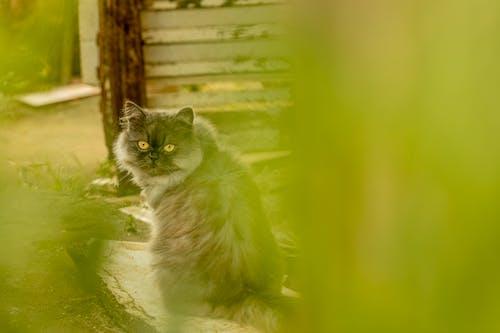 고양이의 무료 스톡 사진