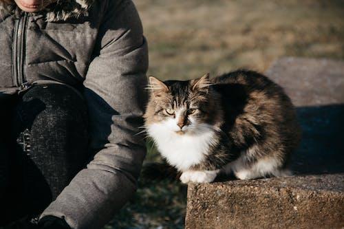 動物, 善良, 天性, 愛 的 免费素材照片