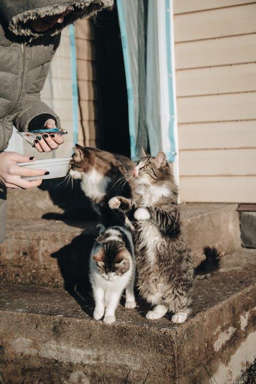 動物攝影, 可愛, 可愛的, 善良 的 免费素材照片