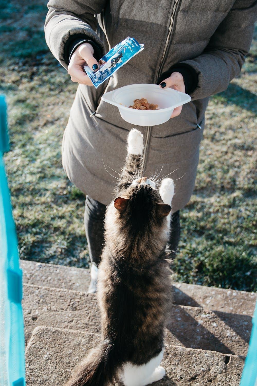 A woman feeding her cat. | Photo: Pexels