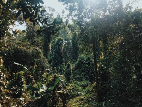 Free stock photo of chiang mai, forest, green, jungle
